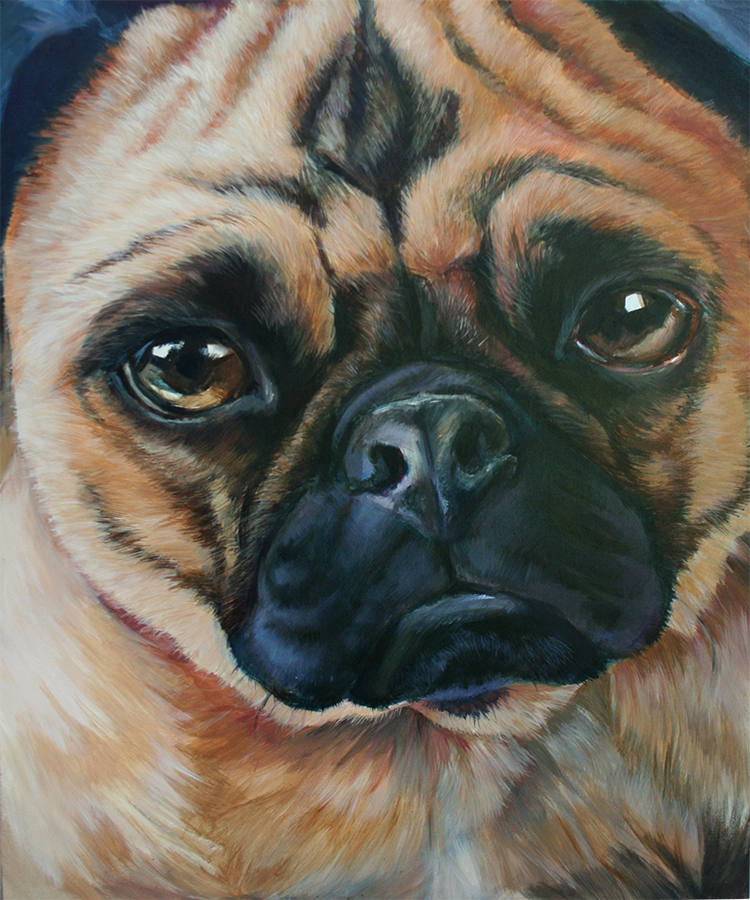 Pugly Study